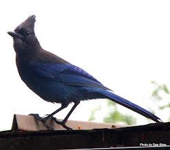 Photo: (Year 2) Day 349 - I Love This Bird