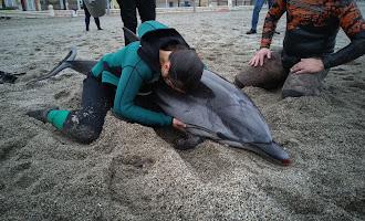 Muere el delfín que se dejó ver en El Zapillo