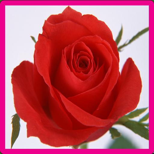 Rose Memory Game file APK for Gaming PC/PS3/PS4 Smart TV