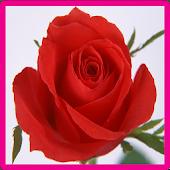 Rose Memory Game