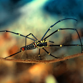 Walk by Farid Wazdi - Animals Insects & Spiders