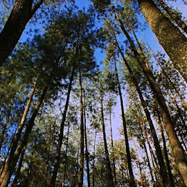 Hutan Raya Dago by Mulawardi Sutanto - Nature Up Close Trees & Bushes ( forest, mantap, dago, travel, trees, hutan raya, bandung )