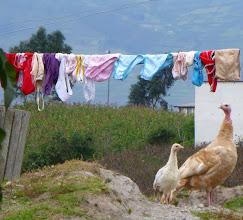 Photo: Scene in a neighbor's yard