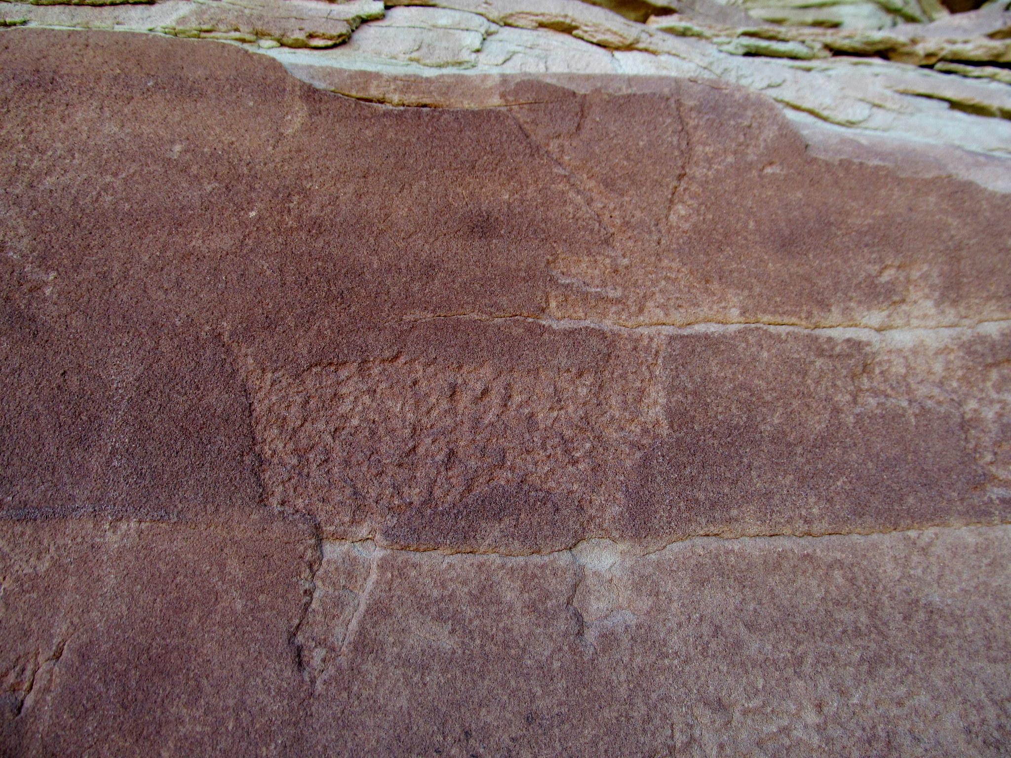 Photo: Deer petroglyph