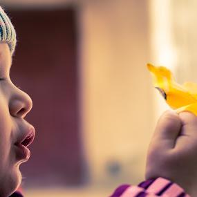 leaf by Iana Udrea - Babies & Children Child Portraits ( sweet, girl, leaf, baby, otumn )