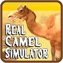 Real Camel Simulator icon