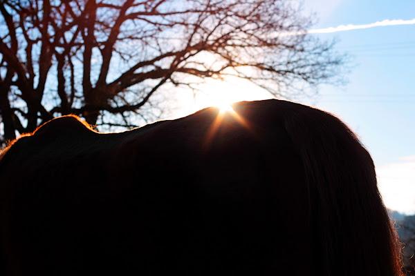 La luce che sagoma il mondo di PhotoBySaraPesucci