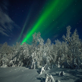 Night by Jens Andre Mehammer Birkeland - Landscapes Starscapes ( instagram, winter, tree, aurora borealis, snow,  )