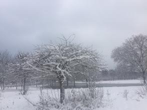 Photo: Mercredi 7 février 2018- Marche Nordique