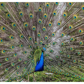 by Nancy Gray - Animals Birds