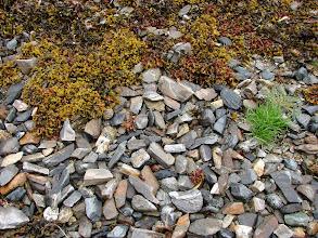 Photo: Beach rocks in Nabannah Bay.