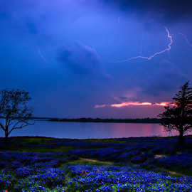 Approaching Storm by Tom Weisbrook - Nature Up Close Other Natural Objects ( lupinus texensis, lightning, motion, tree, texas, clouds, long exposure, ennis, bluebonnets, meadow view nature area, spring, cloudy, wildflowers, lake bardwell, sunset, indian paintbrush, thunderstorm )