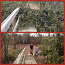 Photo: Two rather nice cedar trees grew to the right of the bridge but weren't able to survive the storm that ravaged the area. We spent about half an hour removing the trees and checking on the recently installed puncheon beyond the bridge (several hundred feet of it) and this was the worst destruction we found.