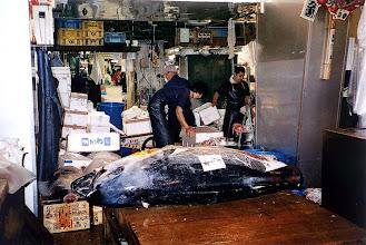 Photo: Tokio - targ rybny Tsukiji / Tokyo - fish market Tsukiji