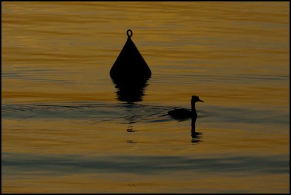 Silhouette sul lago di maxrav