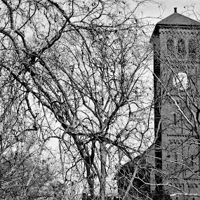 Clock Tower at Chapel by Aulander Skinner - Buildings & Architecture Places of Worship ( chapel. tower. black and white, trees, branches )