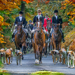 The Hunt by Rich Reynolds - Sports & Fitness Other Sports ( horseback, fox, equine, foxhound, horses, hound )