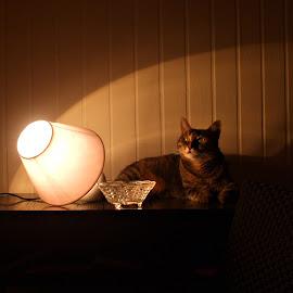 Lenče by Slavica Trajkovic - Animals - Cats Playing