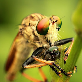 by Putu Yustiantara - Animals Insects & Spiders