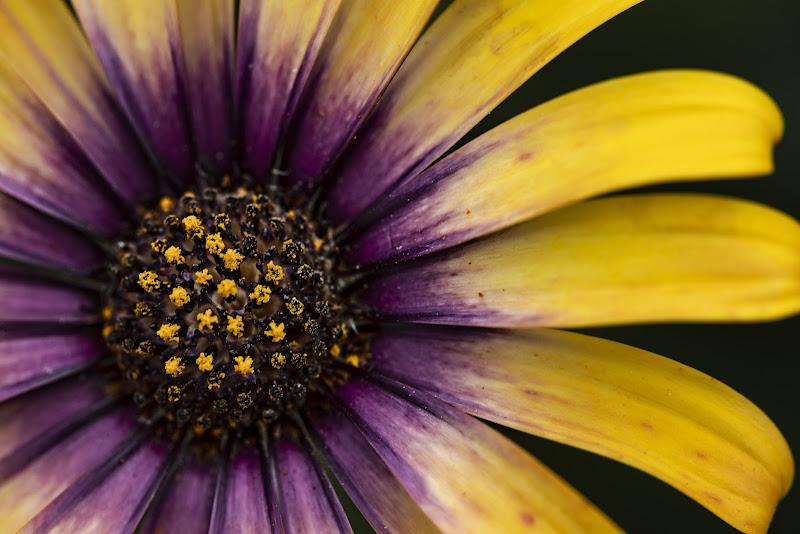 La primavera in giardino di marco_ricciardiello