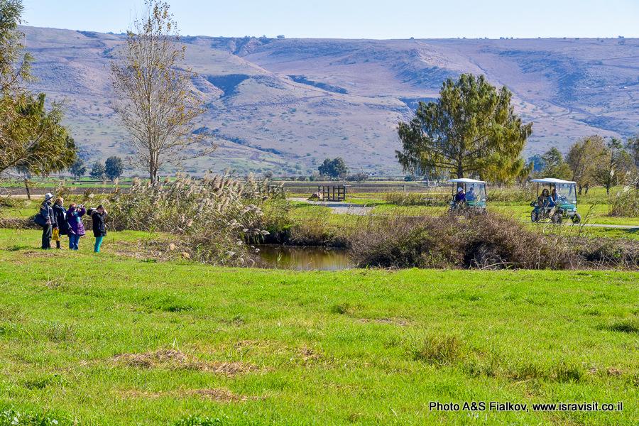 Экскурсия в Национальном парке Израиля Агамон а-Хула.