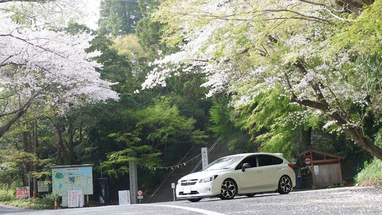 インプレッサ スポーツ GP6の桜と愛車,桜とコラボ,桜とスバル,桜に関するカスタム&メンテナンスの投稿画像5枚目