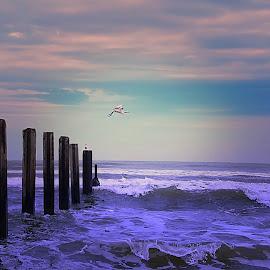 egret by Fereshteh Molavi - Uncategorized All Uncategorized ( wavea, clouds, water, sea )