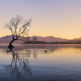 Lake Wanaka at Dawn by Anupam Hatui - Landscapes Waterscapes ( dawn, tree, waterscape, landscape, new zealand,  )