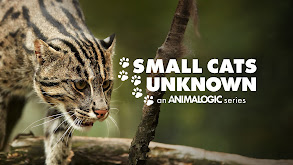 Small Cats Unknown thumbnail