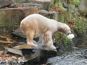 Photo: Knut ist bereit zum Ballspiel :-)
