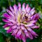 Home Flower 5   24 08 18.jpg