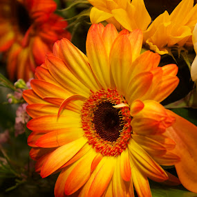 Autumn Florals by Laura Bentley - Nature Up Close Flowers - 2011-2013 ( yellows, colorful, petals, bright, autumn, beautiful, fall, oranges, vibrant, flower )