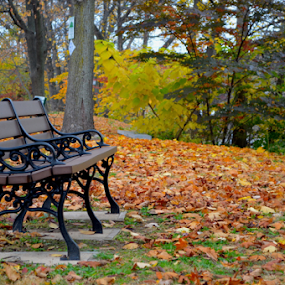 Fall Bench by Rob Kovacs - City,  Street & Park  City Parks (  )