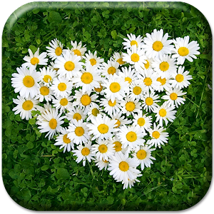 Daisy Live Wallpaper download