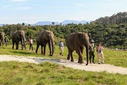 Прогулка и завтрак со слонами в Knysna elephant park