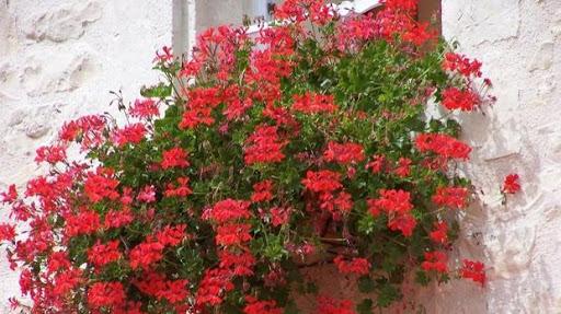 jardins-fleuris-maison-dhotes-et-gite