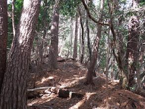 主尾根の登山道に合流