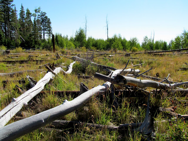 Downed trees