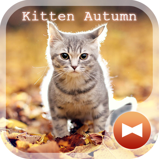 Kitten Autumn CatTheme Icon