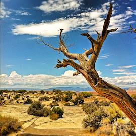 Utah by Gerardo Robledo - Instagram & Mobile iPhone