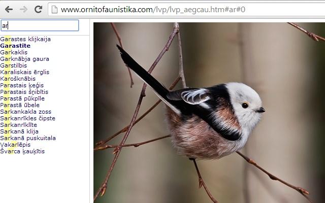 Latvijas Putni