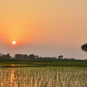 Sunset in Fields by Arsalan Sandhila - Landscapes Sunsets & Sunrises (  )