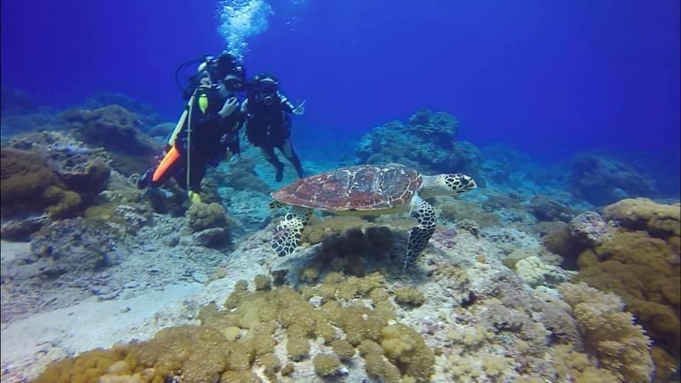 來綠島潛水跟著海龜悠遊海底