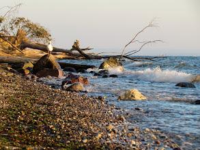"""Photo: Dann begann die """"Wildnis"""" des Brodtener Ufers."""