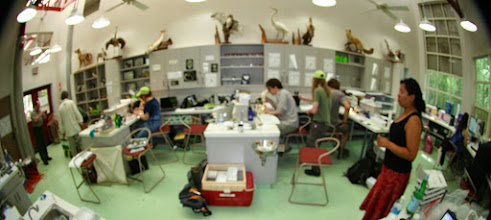 Photo: The greatest photo of the lab and people working that could ever be taken, but out of focus. Left to right: Somebody, Chris, Brittany's bum, Victoria, Joe, Brian, Nathan, Jocelyn, Stephanie.