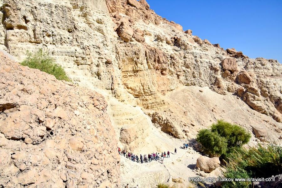 Экскурсия - поход в национальном парке Эйн-Геди. В ущелье вдоль ручья Давида. Экскурсии в Израиле.