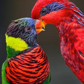 Gossip by PS FOONG - Animals Birds