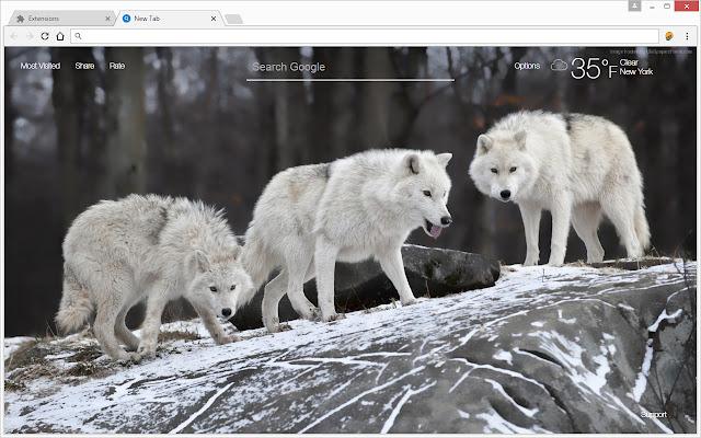 Wolf Wallpaper HD New Tab