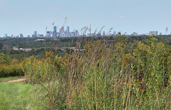 Photo: Downtown Minneapolis obscured by the tall prairie grasses.
