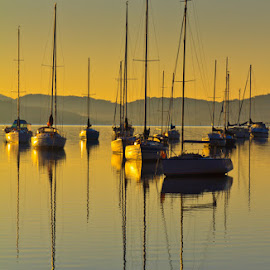 Reflecting by Barbara Scott - Transportation Boats ( beautiful, sunrise, reflections, australia, boats, new south wales )